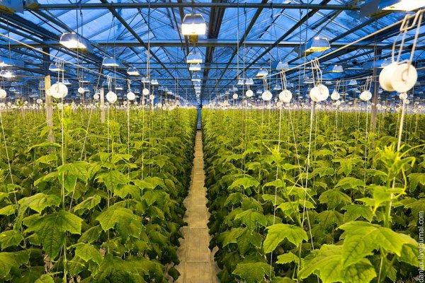 """В Новосибирской области ГК """"Горкунов"""" создает третье производство тепличных овощей"""