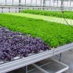 В Крыму наращивают производство овощей закрытого грунта