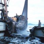 В Архангельской области планируется создать кластер по переработке морских биоресурсов