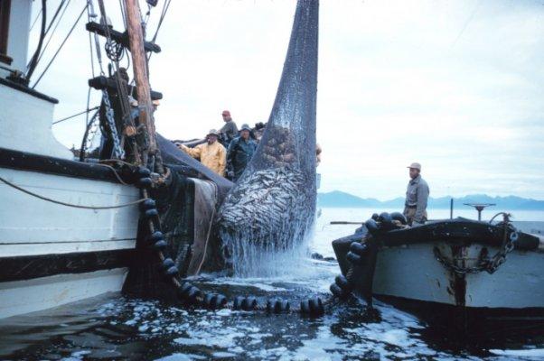 Губернатор Архангельской области высказался за создание на территории Поморья рыбопромышленного кластера