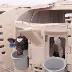 «Русмолоко» увеличивает объемы производства