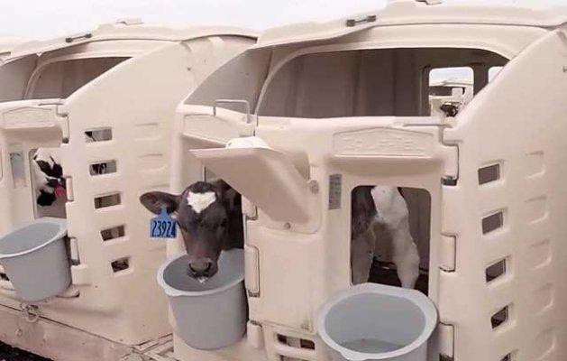 """Компания """"Русмолоко"""" расширяет производство молочного сырья в Пензенской области"""