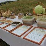 Фермеры Татарстана получили возможность продавать свои продукты в специализированных отделах магазинов Казани
