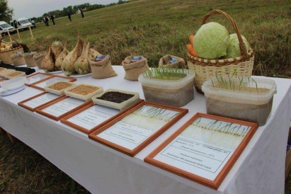 Фермерские продукты будут продавать в магазинах Казани