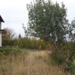 Правительство Алтая рассматривает возможность продажи сельскохозяйственных земель