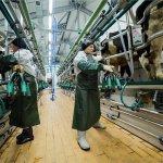 В Республике Хакасия через 3 года появится новый животноводческий комплекс молочного направления