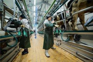 В Хакассии через 3 года появится крупный молочный комплекс