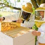 Пчеловоды Пензенской области создают профильный кооператив