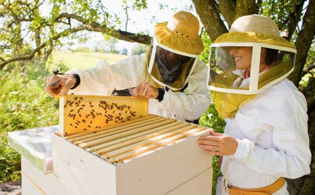 В Пензенской области пчеловоды решидли объединиться в кооператив