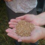 В Орловской области завершается строительство завода по производству семян