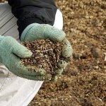 В Новгородской области создают предприятие по переработке птичьего помета в биоудобрение