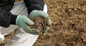 В Новгородской области создается производство гранулированного биоудобрения