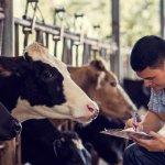 Правительство Пензенской области выделяет на поддержку фермеров более 86 миллионов рублей