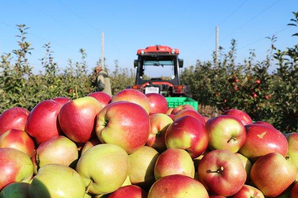 Агро-Белогорье расширяет территорию яблоневых садов