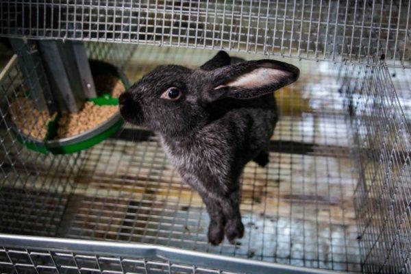 В Ленинградской области открылась современная кролиководческая ферма