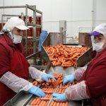 В республике Дагестан скоро заработают новые мясокомбинаты