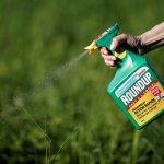 Международный концерн Bayer намерен разработать новые средства против сорняков
