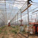 В Дагестане строится крупный тепличный комплекс