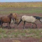 В Курганской области принимают новые законы по ответственности за безнадзорный выпас скота