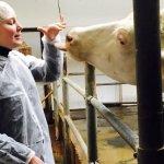 Агрохолдинг «Кабош» переносит производство молока в Смоленскую область