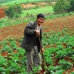 С 2020 года в сельском хозяйстве Приморского края не будут использовать рабочих-иностранцев
