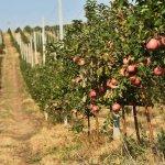 В Карачаево-Черкессии сады интенсивного типа появятся в личных хозяйствах граждан