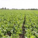 Компания «Штрубе»  в Воронежской области представит новые агротехнологии