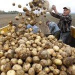 Фермеры Московской области, объединившись в кооперативы, получат больше средств господдержки