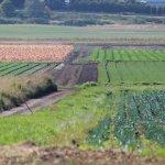 В правительстве Российской Федерации рассмотрят вопрос контроля плодородия земель