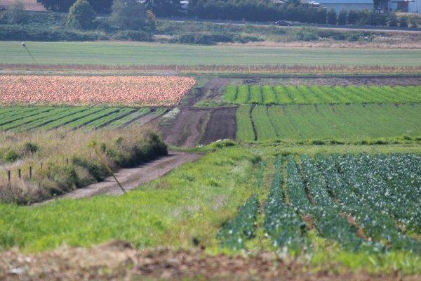 В правительстве рассмотрят вопрос о плодородии сельхозземель и паспортизации участков