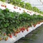 Госдума предлагает снизить НДС для производителей плодово-ягодной продукции