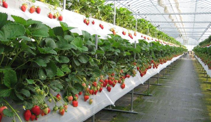 НДС для производителей плодово-ягодной продукции снизят вдвое