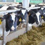 В Удмуртии активно развивают молочное животноводство