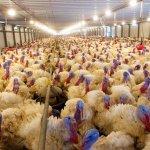 В Тульской области построен уникальный завод по утилизации птичьей подстилки