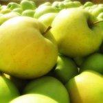 Садоводы России просят правительство жестче проверять качество белорусских яблок