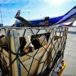 Венгерские коровы породы «голштинская» прибыли в Приморье авиарейсом