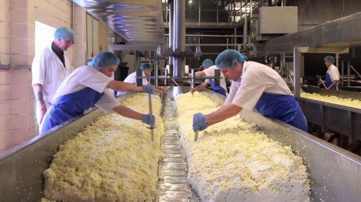 """В ТОР """"Катайск"""" появился первый резидент, который будет производить молочную продукцию"""