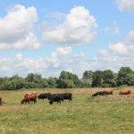 Стоимость аренды краснодарских сельхозугодий будет пересмотрена