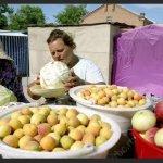 Садоводческие организации предлагают новый подход реализации сельхозпродукции