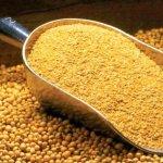В Саратовской области создано производство кормов на основе высокопротеиновой сои