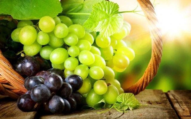 В Севастопольском университете станут готовить специалистов виноградарей