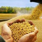 Компания Lotte International из Южной Кореи намерена инвестировать в агропром Амурской области