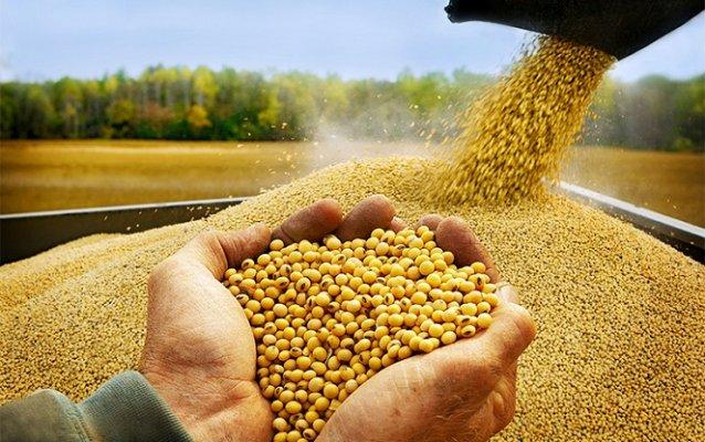Южнокорейский бизнес заинтересовался амурской соей и зерновыми