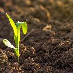 Микроорганизмы уваровской биофабрики способны до 70% повышать урожайность