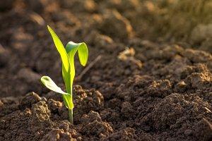 Биофабрика в Тамбовской области производит экологически безопасеные средства защиты растений