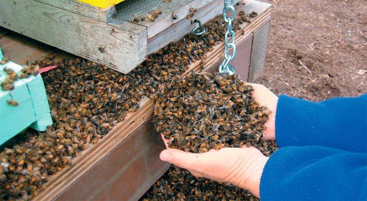 В Тульской области выяснили причину массовой гибели пчел