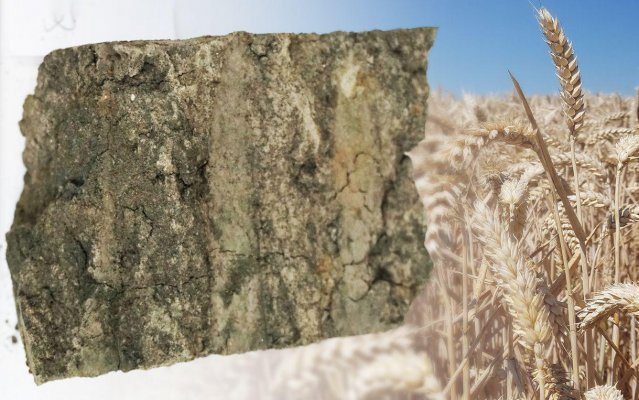 Натуральный, экологически безопасный минерал – глауконит может стать полноценной заменой калийного удобрения