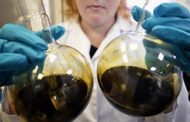 В Курчатовском институте получили новый штамм бактерии успешно борющийся с патогенными грибами и сине-зелеными водорослями