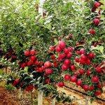 В Карачаево-Черкессии развивают проект мини-садов на приусадебных участках
