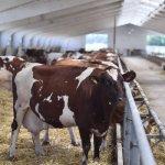 В Оренбургской области открылся крупный молочный комплекс